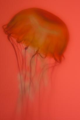 jelly-4
